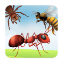 Insects Learning Flashcards