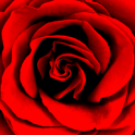 Roses Photo Collage Editor