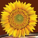 Sunflower Photo Collage