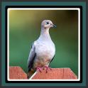 Imágenes en vivo - Doves