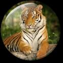 पशु HD लाइव वॉलपेपर