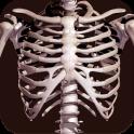 Huesos Humanos 3D (anatomía)