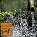 традиционные бамбука фонтан