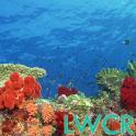 수중 산호초 LWP