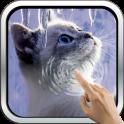 Interactive Kitten