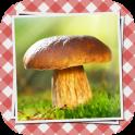 Pilze sammeln & bestimmen PRO