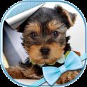 Cute Dogs Live Wallpaper