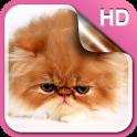 Fluffy Kitty Live Wallpaper HD