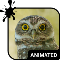 Funny Owl Animated Keyboard + Live Wallpaper