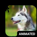 Cute Husky Animated Keyboard + Live Wallpaper