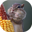Funny rodents live wallpaper