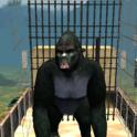 réal gorille simulateur