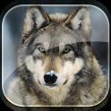 Wolf Live Wallpaper HD