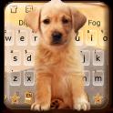 Cute Dog Labrador