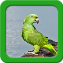 Parrot Live Wallpapers