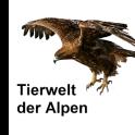 Tierwelt des Alpenraums
