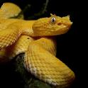 Venomous Snakes of America