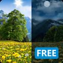Summer Dandelion Live Wallpaper FREE