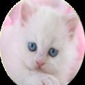 +500 cute kitten wallpaper
