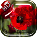 Velvet Poppies Live Wallpaper