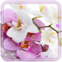 Orchid China HD live wallpaper