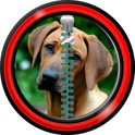 Zipper Lock Screen – Dogs