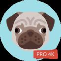 Pug Wallpapers 4K Pro Pug Backgrounds