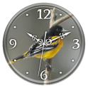 Northern Oriole Clock Live WP