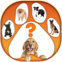 What Dog are You Test App