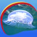 Cool Jellyfish Live Wallpapers