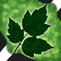 Leaves Photo Crop