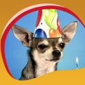 Chihuahuas Live Wallpapers