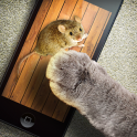 Mouse game toy for cats