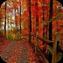 3d Herbst Tapeten