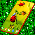 Ladybug Live Wallpaper Cute Ladybird Wallpapers