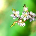 Spring Garden Live Wallpaper