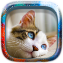 Free Picture Puzzle: Cats