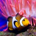 Peixes Oceano Papel de Parede