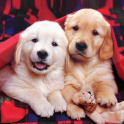 Puppies Live Wallpaper Cute Puppy Pictures