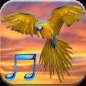 Oiseau Sons gratuit