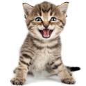 Cat Sounds Ringtones Purr