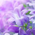 라일락 꽃꽃이라이브 배경 화면
