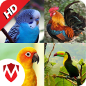 100 Bird sounds