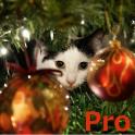 Advent Calendar Xmas Cats Pro