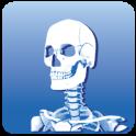 Prowise Skeleton 3D