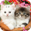 Cute Baby Animals Pictures