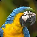 Talking Parrot Voice Changer
