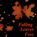 Leaves Falling Free Live WP