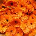 Fleurs Puzzle