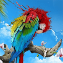 African Talking Parrot